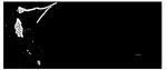 Fischershop und Messercenter Basel Logo